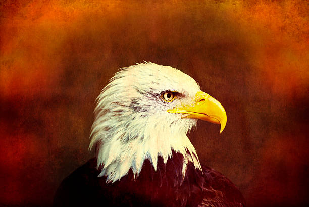 profile eagle grunge - royalty stock photos and pictures