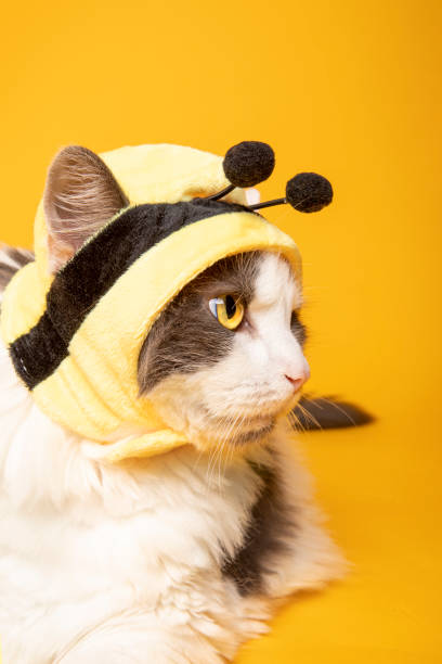 Profile of a Cat in  Bee Hat A profile of a cute cat wearing a bumblebee hat. sdominick stock pictures, royalty-free photos & images