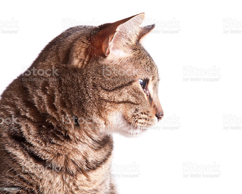 Profile of a cat stock photo