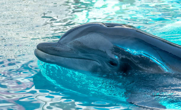 profile of a dolphin stock photo