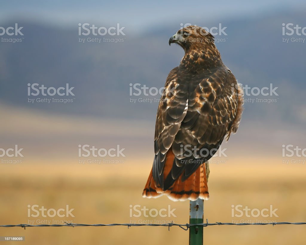 Profile of a Hunter royalty-free stock photo