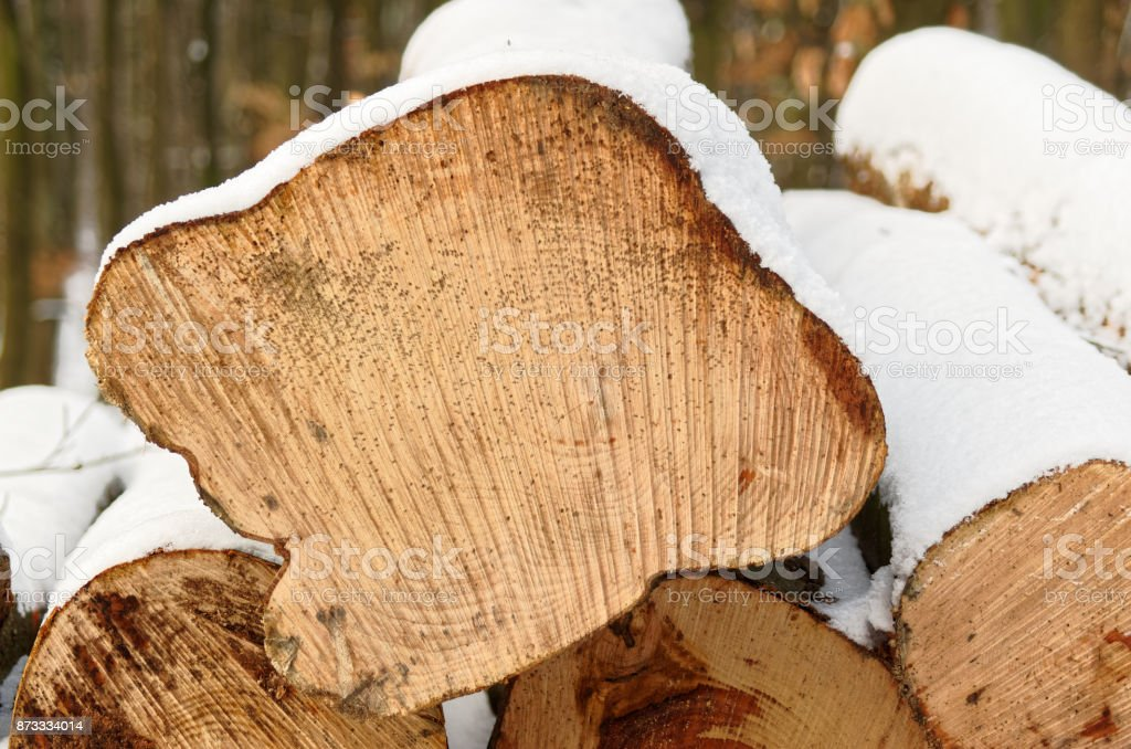Profile of a tree trunk in a winter stock photo
