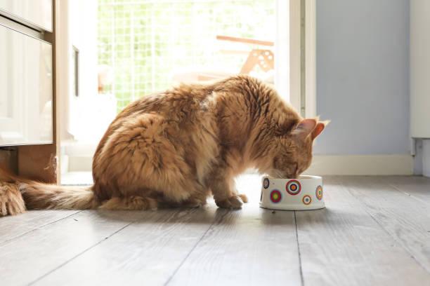 profile of cat eating from bowl - котик яркий стоковые фото и изображения