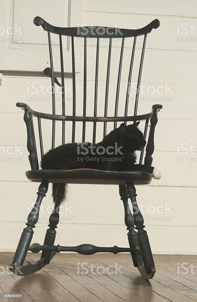 Profile of Cat on Chair stock photo