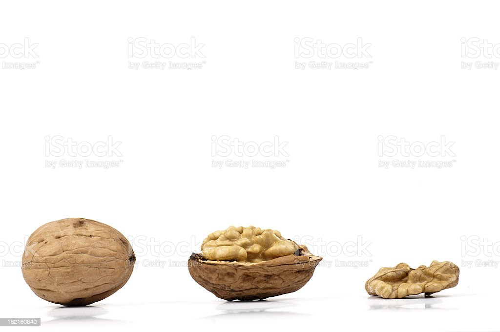 profile of walnut stock photo