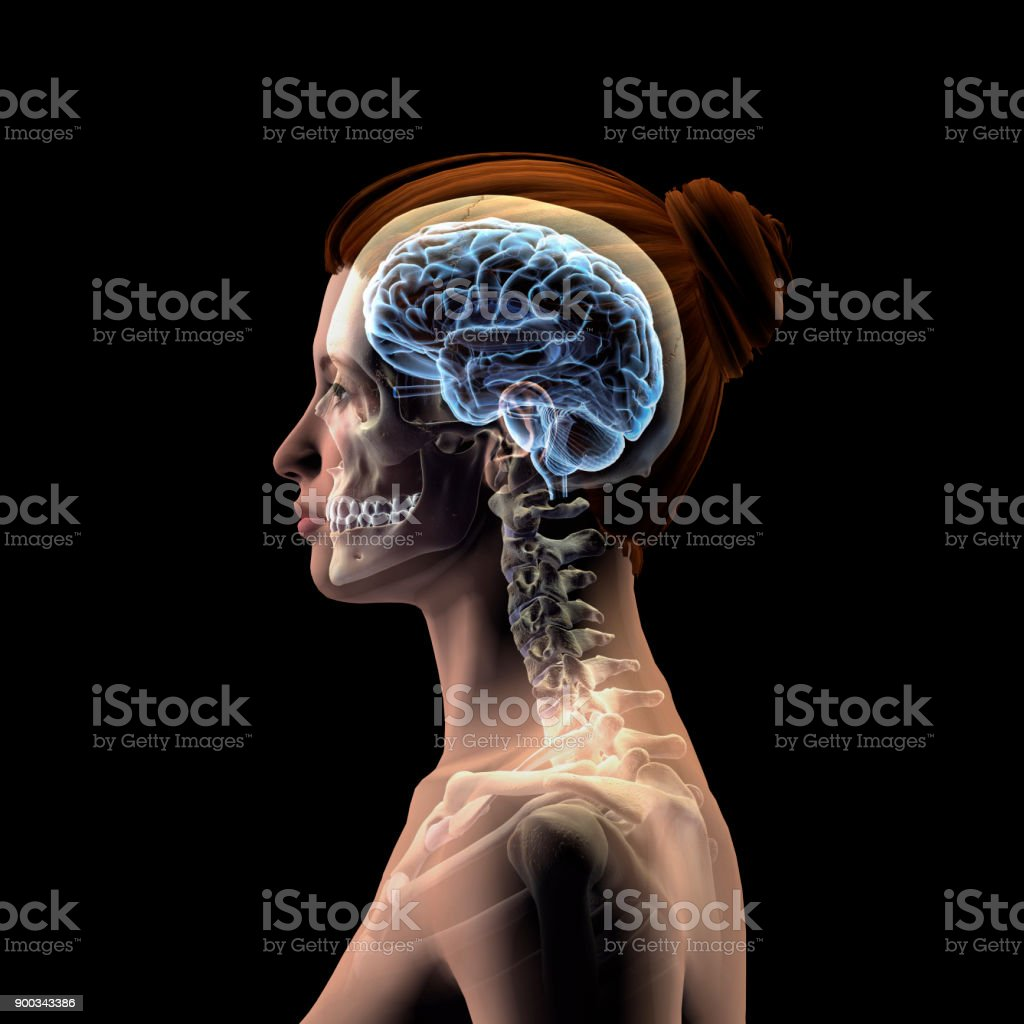 Profile of Woman's Head with Skull and Brain on Black Background stock photo
