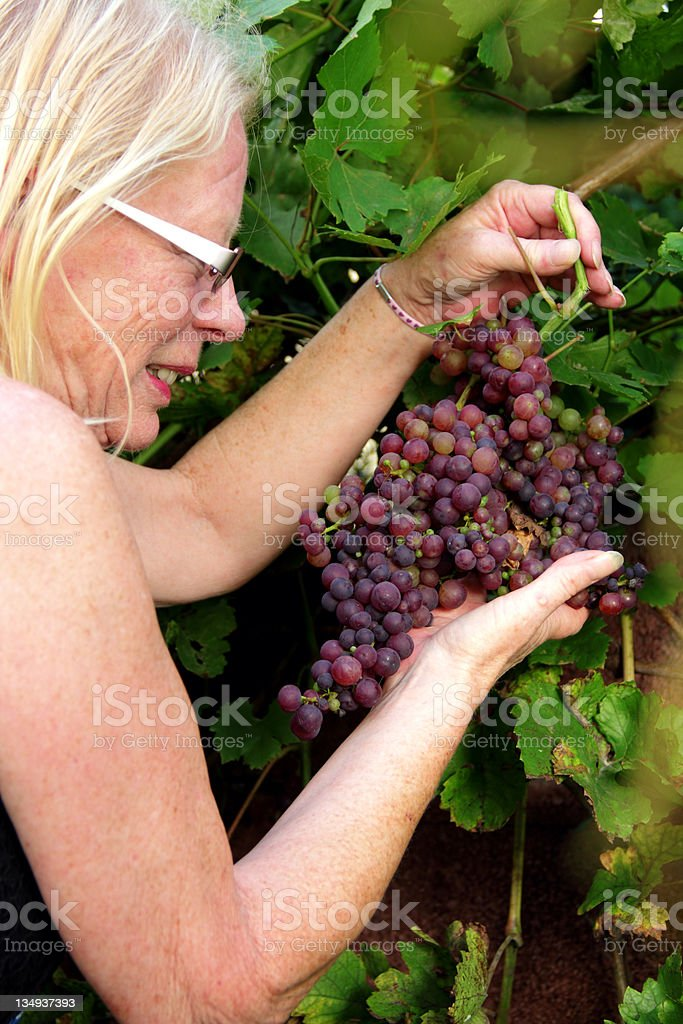 profile with grapes stock photo