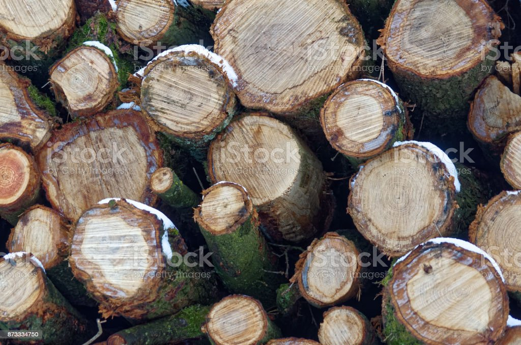 Profiles of a tree trunks in a winter stock photo