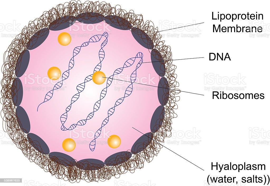 Prokaryotic cell illustration stock photo