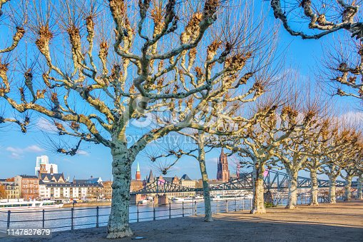 Stock photograph of promenade with row of plane trees along River Main in Frankfurt am Main Germany on a sunny day.