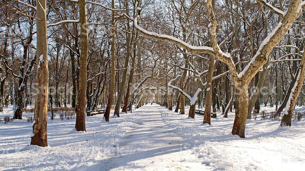 Promenade in winter time stock photo