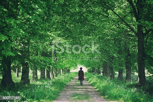 A woman walking on a country road through a tree avenue with green leaves in summer.