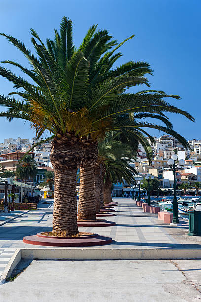 Promenade with palm trees stock photo