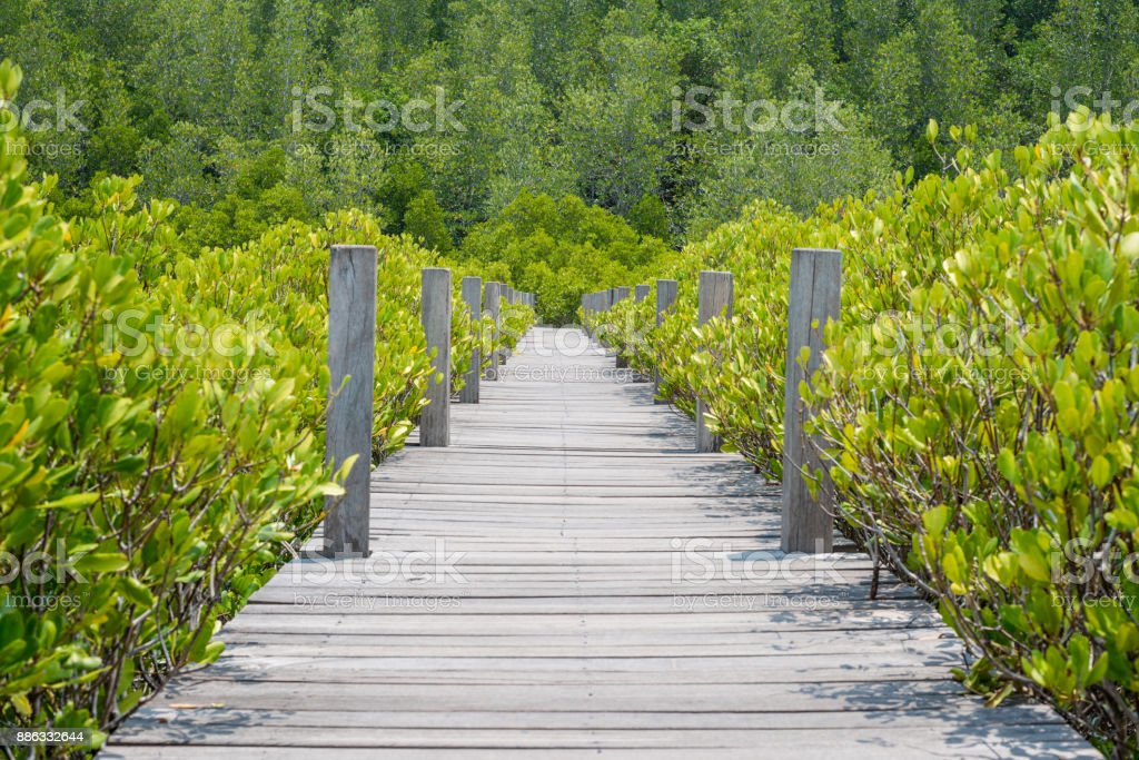 Prong Thong forest stock photo