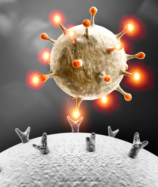 Propagation of the virus. How coronavirus attacks cells. If the virus finds a compatible receptor allow covid-19 to replicate itself. stock photo