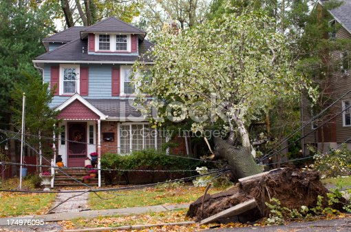 Property Damage Concepts with a Fallen Tree and Downed Power Wires.
