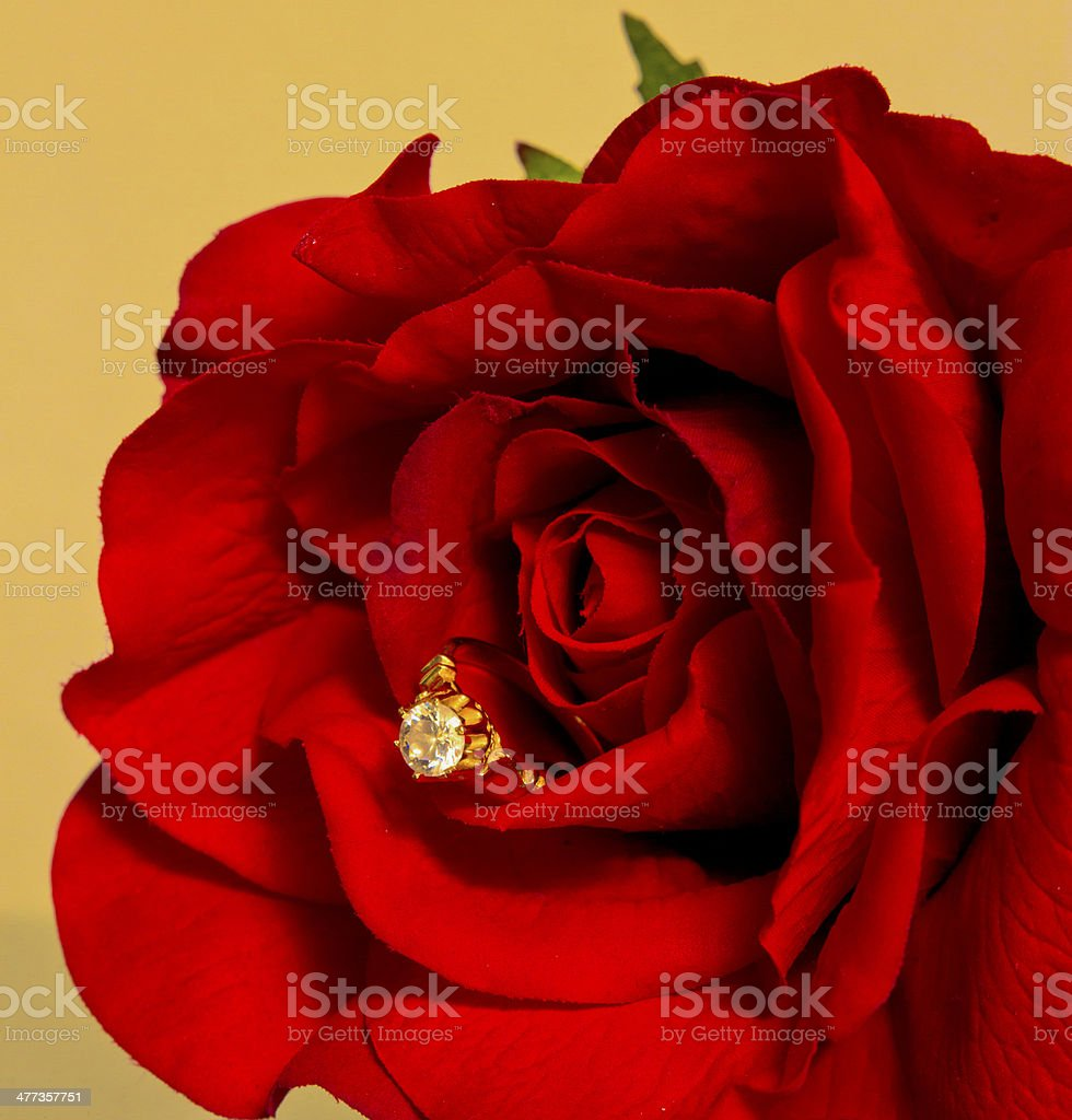 Proposal Of Marriage With Rose royalty-free stock photo