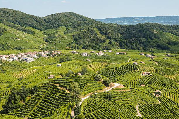 prosecco vineyards in valdobbiadene town - venezien stock-fotos und bilder