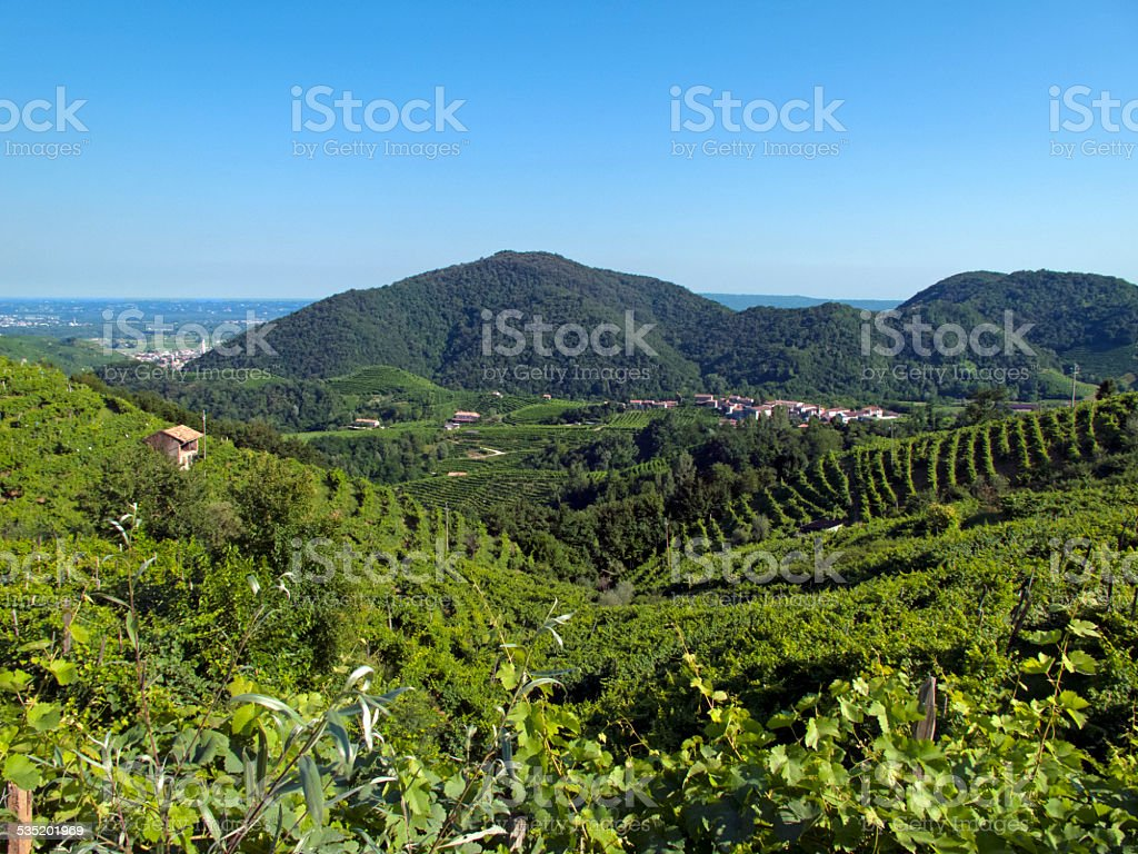 Prosecco viticulture (Italy) stock photo