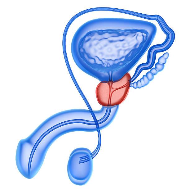 prostatitis ist gefährlich behandlung akute.jpg