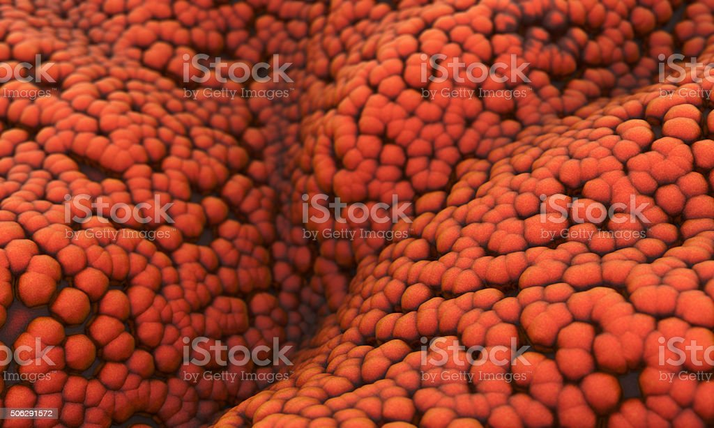 Prostate cancer cells stock photo