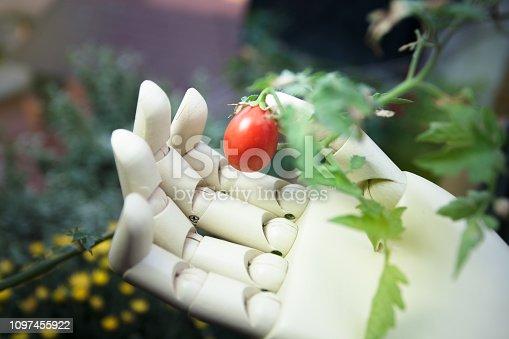 istock prosthetic hand holding cherry tomato 1097455922