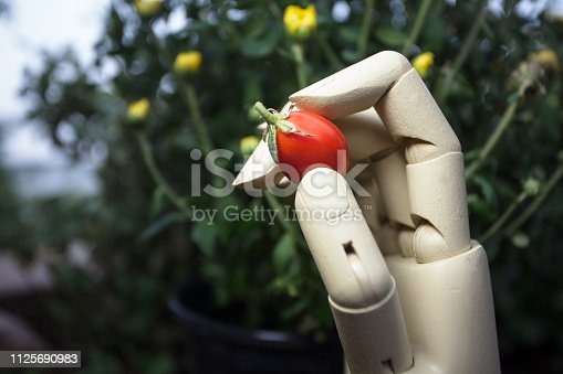 istock prosthetic hand holding cherry tomato 1125690983