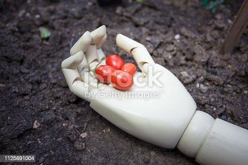 istock prosthetic hand holding cherry tomato 1125691004