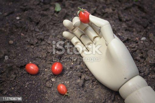 istock prosthetic hand holding cherry tomato 1127636786