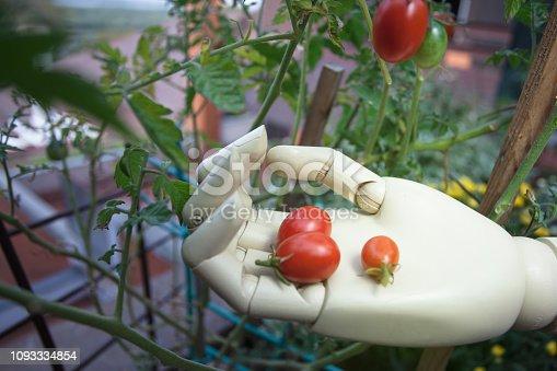 istock prosthetic hand picking cherry tomato 1093334854