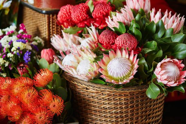 das protea blumen am markt auf madeira - protea strauß stock-fotos und bilder