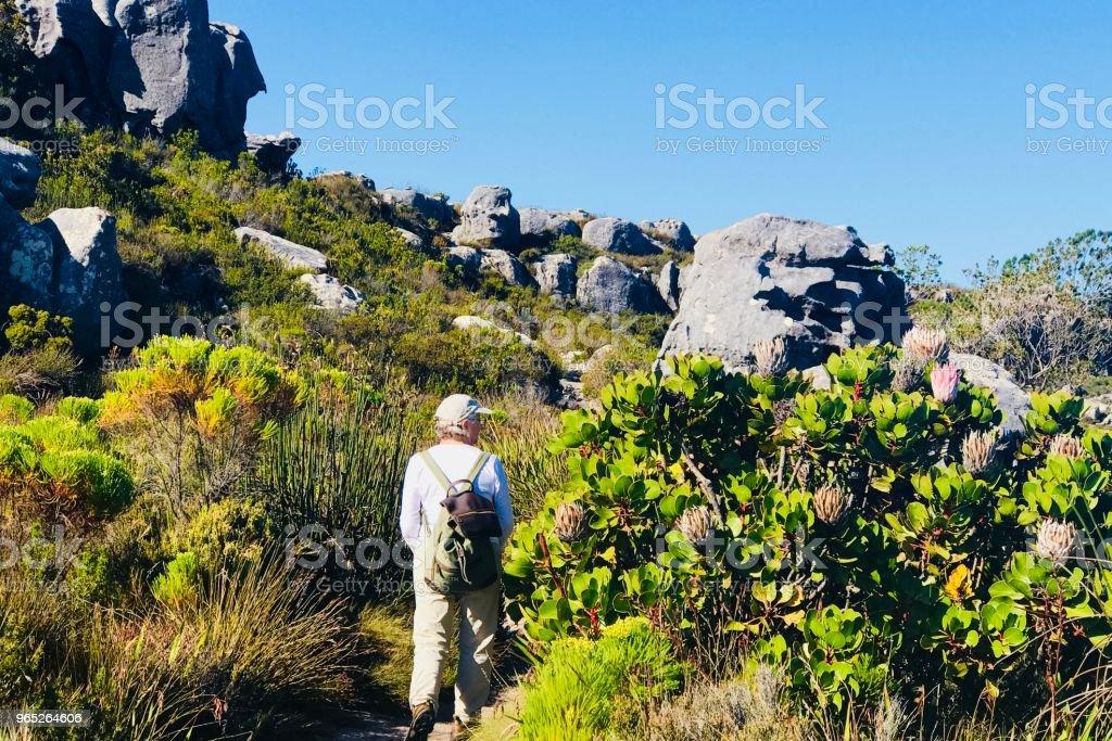 Protea Glance zbiór zdjęć royalty-free