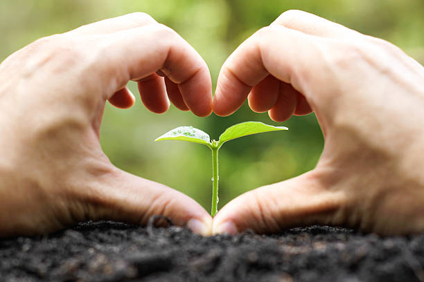 Protect nature hand of a farmer forming a heart shape in front of a young green plant with natural green background / Protect and love nature concept tree hugging stock pictures, royalty-free photos & images