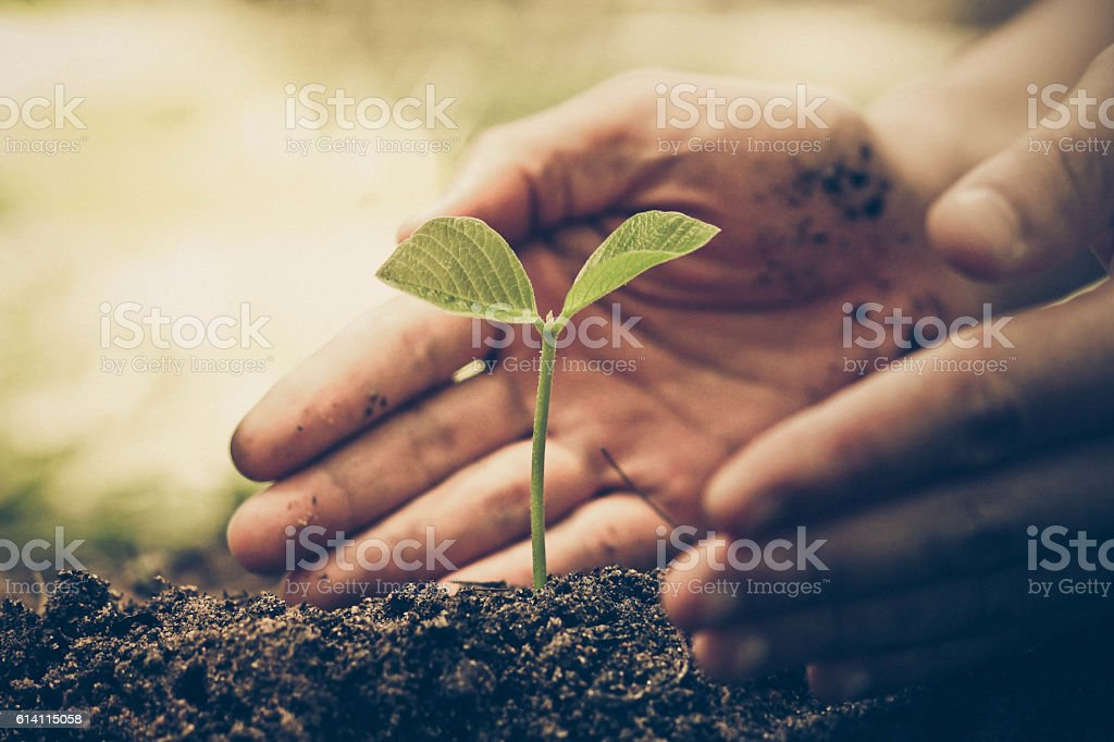 hand of a farmer nurturing a young green plant with natural green...