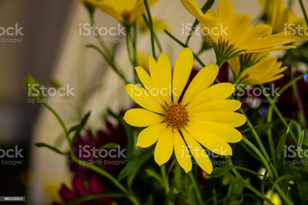 Protect nature royalty-free stock photo