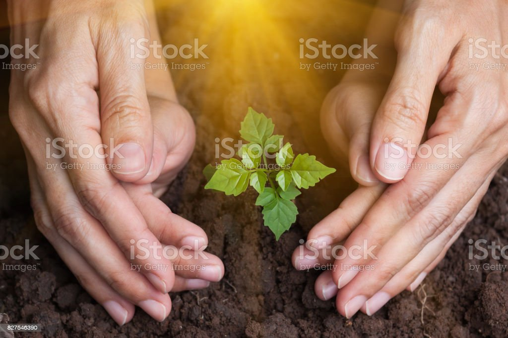 protect the plant's young trees. stock photo