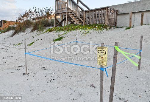 A sea turtle nest is roped off on the beach to protect it from predators and tourists.