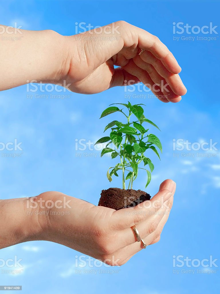 Protecting a plant royalty-free stock photo
