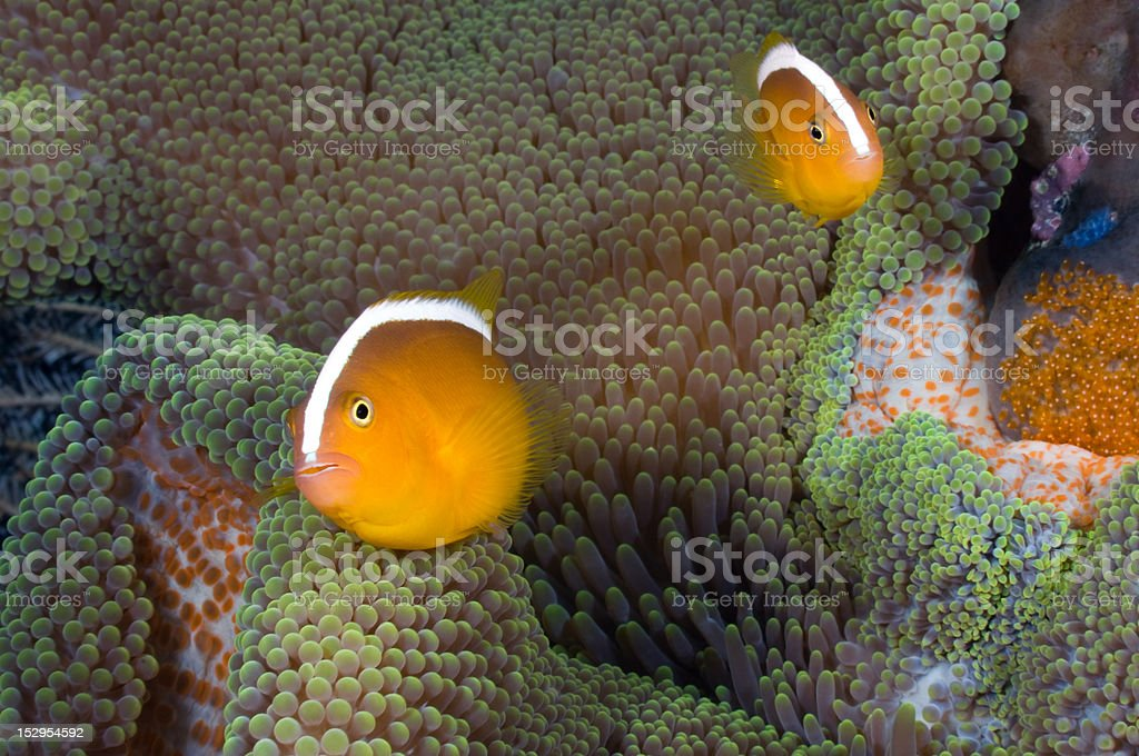 Protecting Eggs royalty-free stock photo