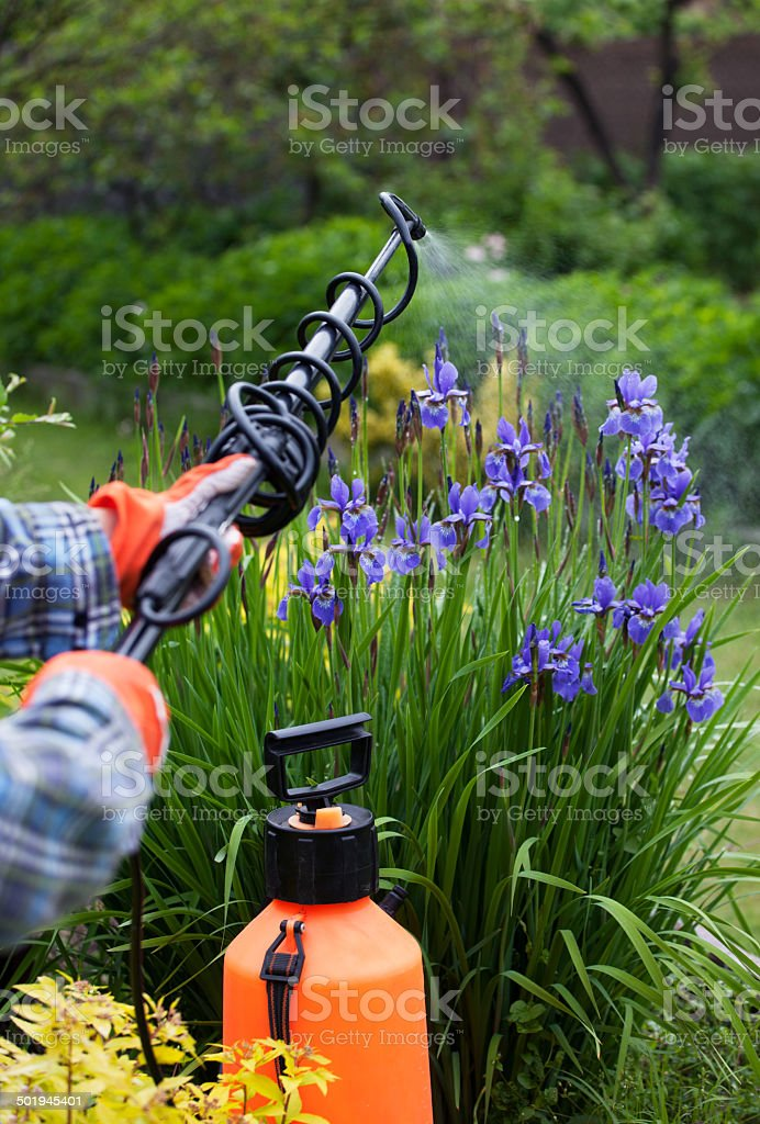 Protecting flower plant from fungal disease stock photo