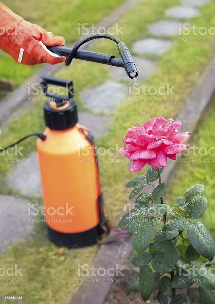 Protecting plant from vermin stock photo