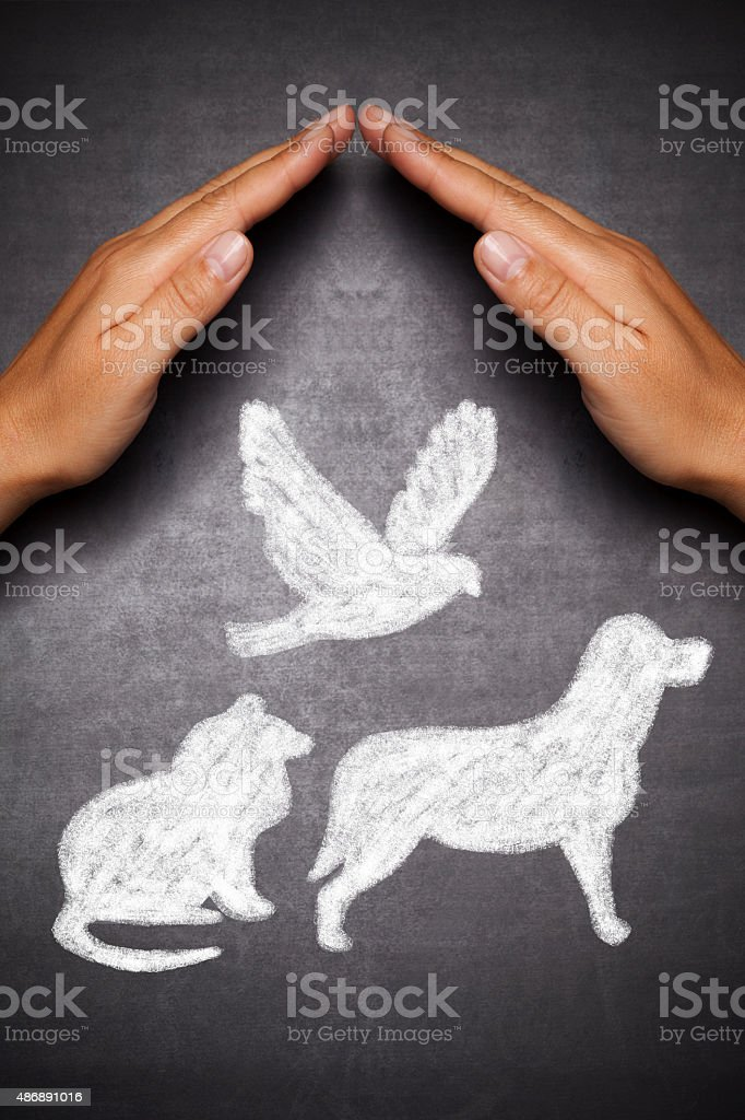 Protection of pets stock photo