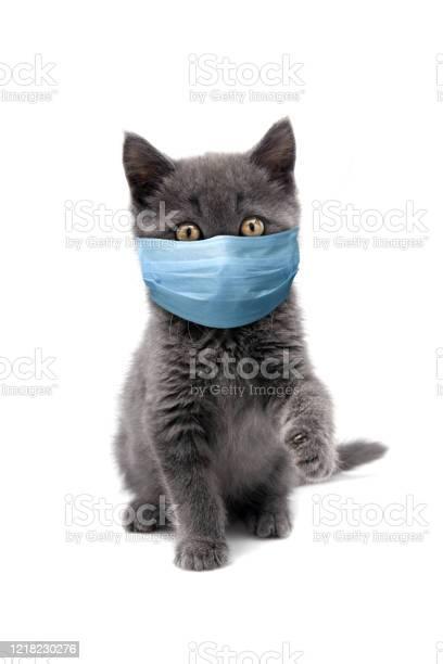Protective face masked cat picture id1218230276?b=1&k=6&m=1218230276&s=612x612&h=ja4b0fcy2 txuky4bxgqdp8dvtkps wpbmf5yhtohjq=