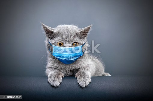 Protective face masked cat