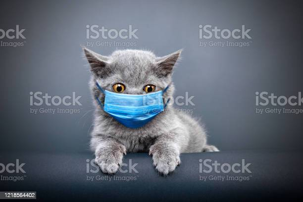 Protective face masked cat picture id1218564402?b=1&k=6&m=1218564402&s=612x612&h=9dvomb7wrfop2dhksb5zcl98e2wp5ms5oevzj sx3jk=