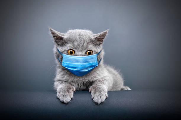 Protective face masked cat picture id1218564402?b=1&k=6&m=1218564402&s=612x612&w=0&h= lcivcvjxa5q4 zvfwjzlmqtfwirukgwiuuxl95fobq=