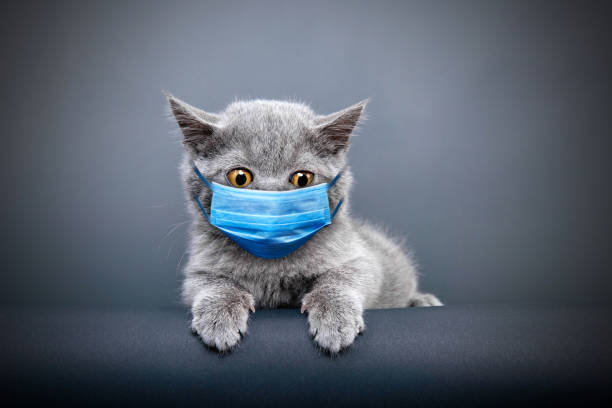 Protective face masked cat stock photo
