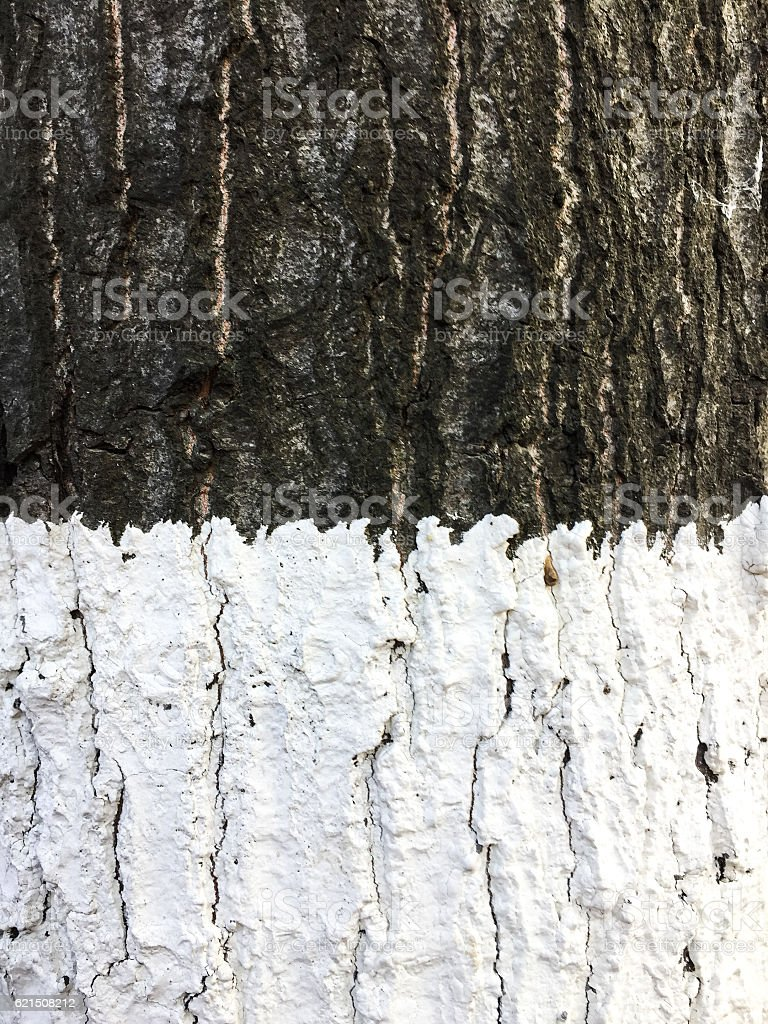 Protective lime wash on tree trunk foto stock royalty-free