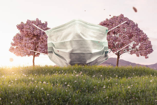 protective mask hanging on japanese cherry trees. 3D Rendering protective mask hanging on japanese cherry trees. 3D Rendering allergy stock pictures, royalty-free photos & images