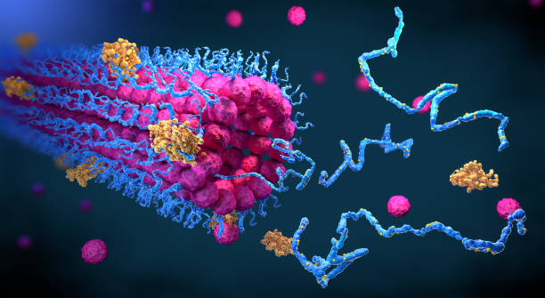Protein enzymes fold into their structure to fulfill their function - 3d illustration stock photo